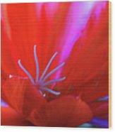 Spring Blossom 8 Wood Print
