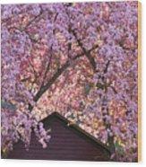Spring Blossom Canopy Wood Print