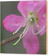 Spring Blossom Close Up Wood Print