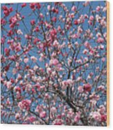 Spring Blossoms Against Blue Sky Wood Print