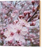 Spring Blossoms Art  Pink Tree Blossom Baslee Troutman Wood Print