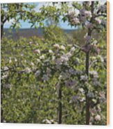 Spring Blossoms Day Wood Print