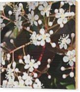 Spring Blossoms Macro Wood Print