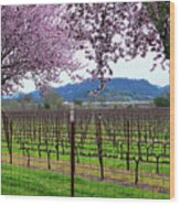 Spring Blossoms Near Calistoga Wood Print by Charlene Mitchell