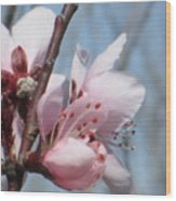 Spring Blossoms  Wood Print by Rosalie Klidies