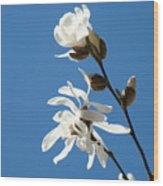 Spring Blue Sky Floral Art Print White Magnolia Tree Baslee Troutman Wood Print