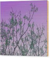 Spring Branches Lavender Wood Print
