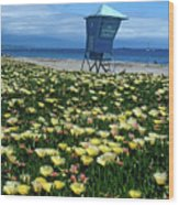 Spring Break Santa Barbara Wood Print
