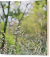 Spring Breeze 3 Wood Print