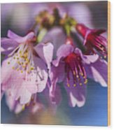 Spring Burst Wood Print