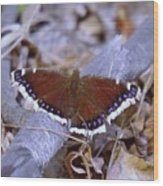 Spring Butterfly  Wood Print
