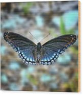 White Admiral Or Red-spotted Purple Wood Print