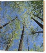 Spring Canopy Skylight Wood Print