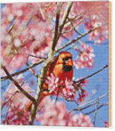 Spring Cardinal Wood Print
