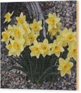 Spring Cheerleaders - Daffodils Wood Print