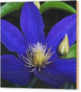 Spring Clematis Wood Print