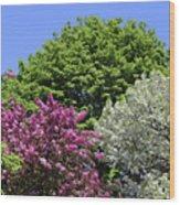 Spring Color 2 051818 Wood Print