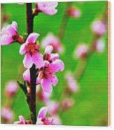 Spring Color Wood Print