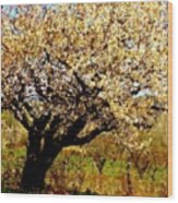 Spring Comes To The Old Cherry El Valle New Mexico Wood Print