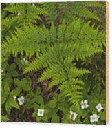 Spring Companions Wood Print