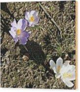 Spring Crocus Wood Print
