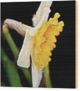 Spring Daffodil Flower Wood Print