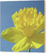 Spring Daffodil Flowers Art Prints Blue Sky Baslee Troutman Wood Print