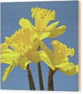 Spring Daffodil Flowers Art Prints Canvas Framed Baslee Troutman Wood Print