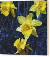 Spring Daffodills Wood Print