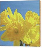 Spring Daffodils Flowers Garden Blue Sky Baslee Troutman Wood Print