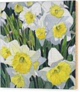 Spring- Daffodils Wood Print