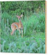 Spring Deer Wood Print