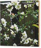 Spring Delight II Wood Print