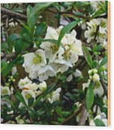 Spring Delight IIi Wood Print