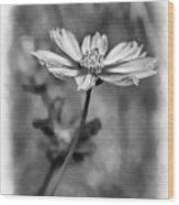 Spring Desires 2 Bw Wood Print