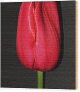 Spring Drop  Wood Print