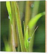 Spring Droplets Wood Print