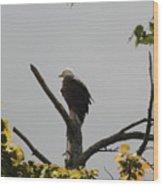 Spring Eagle II Wood Print