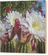 Spring Easter Cactus Blooms 789 Wood Print