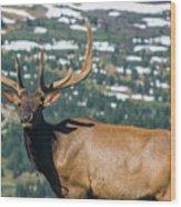 Spring Elk Wood Print