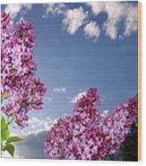 Spring Evening Wood Print