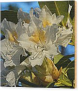 Spring Exuberance  Wood Print