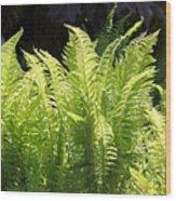 Spring Fern Fronds Wood Print