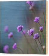 Spring Fields Wood Print