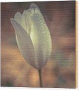 Spring Flower 4 Wood Print