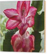 Spring Flower 7 Wood Print