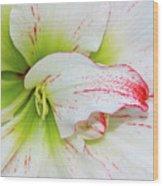 Spring Flower Macro Wood Print