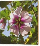 Spring Flower Peeking Out Wood Print