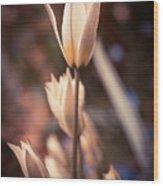 Spring Flowers 2 Wood Print