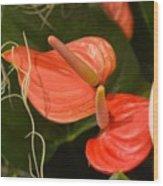 Spring Flowers No.8 Wood Print